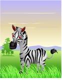Zebra cartoon Stock Photo