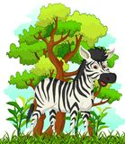 Zebra cartoon with forest background Stock Photos
