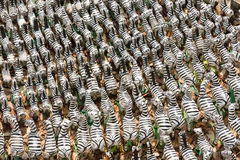 Zebra ceramic doll Stock Photography