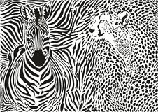 Zebra and cheetah and pattern background Royalty Free Stock Photography
