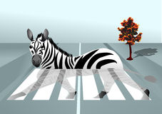 Zebra in the city Royalty Free Stock Photography