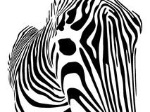Zebra closeup Stock Photo