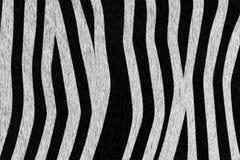 Zebra Coat Background Stock Photos