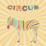 Zebra with color stripes Royalty Free Stock Images