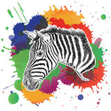 Zebra with Colorful Splashes Vector Illustration Royalty Free Stock Photos