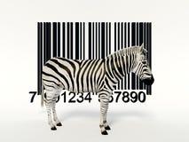 Zebra creativa imagens de stock