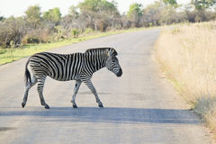 Zebra Crossing Stock Image
