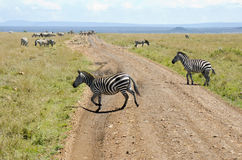 Zebra crossing road Stock Image