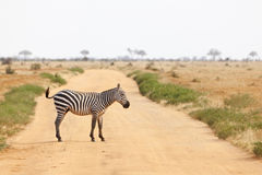 Zebra crossing road in Kenya Royalty Free Stock Photography