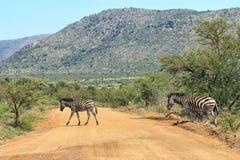 Zebra crossing the road Stock Photo