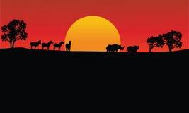 Zebra da paisagem e silhueta do rinoceronte com sol Imagens de Stock Royalty Free