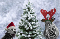 Zebra and dalmatian dog Stock Photo