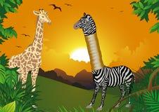 Zebra, das höher sein wollte stock abbildung