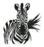 Zebra del disegno della mano Fotografie Stock