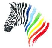 Zebra dell'arcobaleno Fotografia Stock