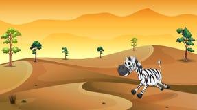 A zebra in the desert Royalty Free Stock Image