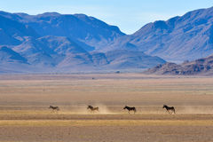 Zebra and Desert Landscape - NamibRand, Namibia Royalty Free Stock Photo