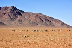 Zebra and Desert Landscape - NamibRand, Namibia Stock Images