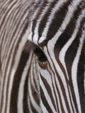 Zebra - detail. Zebra - close-up of eye stock photos