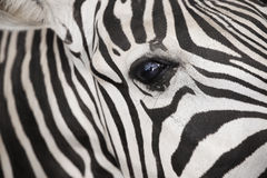 Zebra detail eye Stock Photo