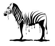 Zebra die zijn strepen losmaakt Stock Foto's
