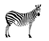 Zebra. Digital drawing of a zebra, only the black lines Stock Images