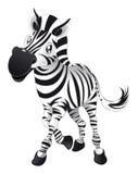 Zebra do bebê Imagem de Stock