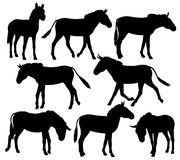 Zebra donkeys. Set of editable vector silhouettes of zebra, ponies or donkeys Royalty Free Stock Image