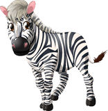 Zebra. Drawn without a background royalty free illustration