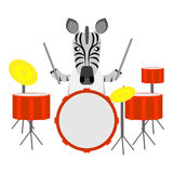 Zebra drummer. Illustration of a zebra on a white background Stock Photo