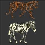 Zebra e tigre di vettore Fotografia Stock Libera da Diritti