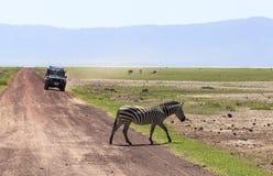 Zebra em Maasai Mara, Kenya imagem de stock royalty free