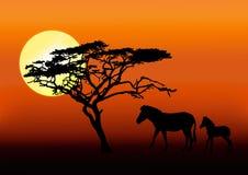 Zebra en baby in zonsondergang Stock Fotografie