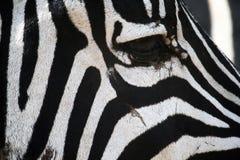 Zebra eye Royalty Free Stock Photography