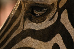 Zebra eye Stock Image