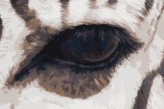 Zebra eye vector illustration Royalty Free Stock Image