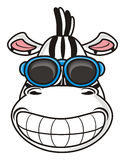 Zebra face smiling broadly in sunglasses Stock Image