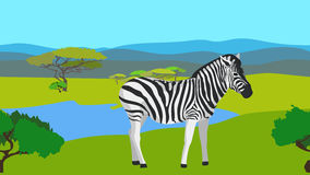Zebra in the field with green grass, horizontal. Zebra in the field with green grass, bushes, lake, clear blue sky on a background horizontal pattern seamless Royalty Free Stock Photography