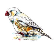 Zebra finch bird sitting on the branch. Watercolor illustration Stock Photography