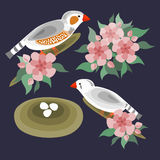 Zebra finches birds and flowers set. Zebra finches birds, flowers, nest, eggs stylized  abstract vector set Royalty Free Stock Photo