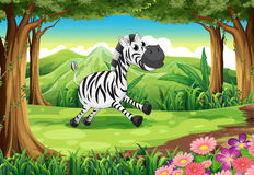A zebra at the forest Stock Photo