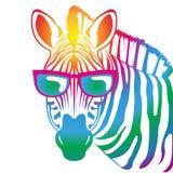 Zebra fresca Fotografia Stock