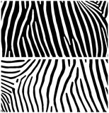 Zebra Fundo animal Fotografia de Stock