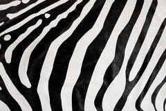Zebra fur Royalty Free Stock Photo