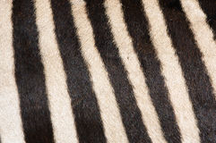 Zebra Fur Background Stock Photos