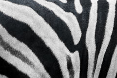 Zebra fur texture Royalty Free Stock Photos