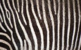 Zebra fur texture background Royalty Free Stock Photos