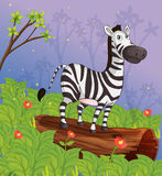 A zebra in the garden Stock Image