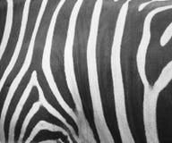 Zebra gestreifter Grunge Hintergrund lizenzfreie stockbilder