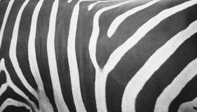 Zebra gestreifter Grunge Hintergrund stockfotografie